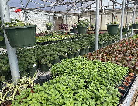 CCTC Plant Sale is just around the corner. (Along with Spring!)